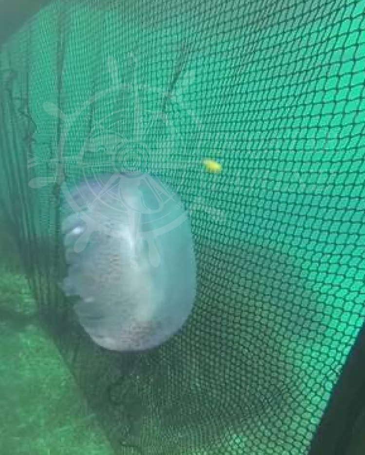 Marsa Malaz Kempinski – Jellyfish Net